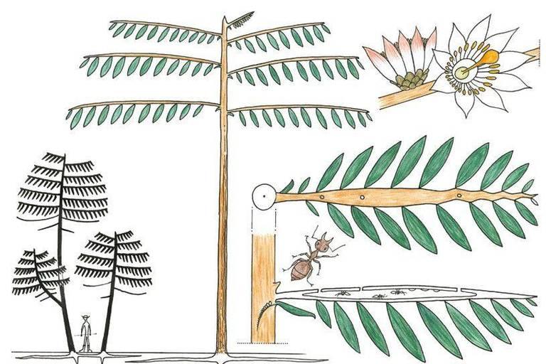 """L'arbre """"Passifloraceae"""", aussi appelé """"arbre de l'adultère"""", était autrefois """"utilisé pour punir les femmes adultères: il suffisait d'attacher la coupable au tronc de l'arbre pour déclencher la fureur des fourmis (qui logent dans ses branches creuses) et le supplice de la femme""""."""