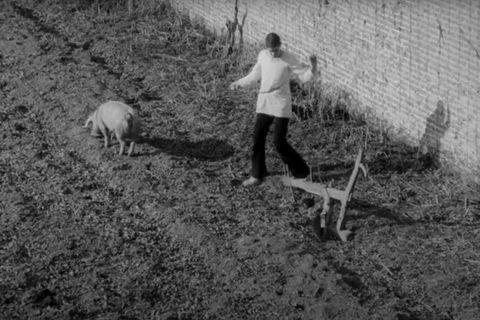 Thierry Zéno: Vie, mort et nausée parmi les bêtes