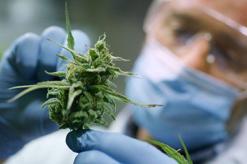 Porté par la pandémie, le marché du cannabis dans ce pays est devenu le deuxième au monde