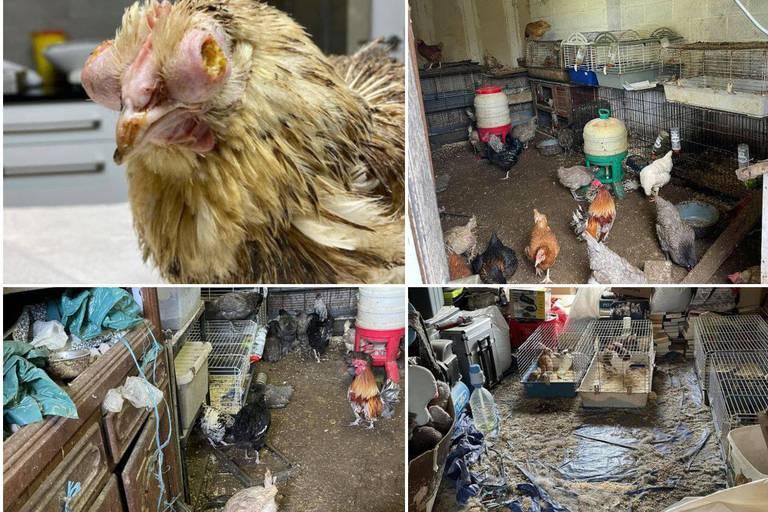 Brûlés, abandonnés dans le noir et baignant dans leurs déjections: plus de 200 animaux maltraités saisis dans une habitation en Flandre