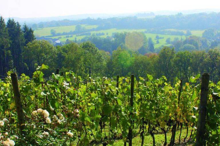 12 vignobles wallons vous ouvrent leurs portes les 17 et 18 juin