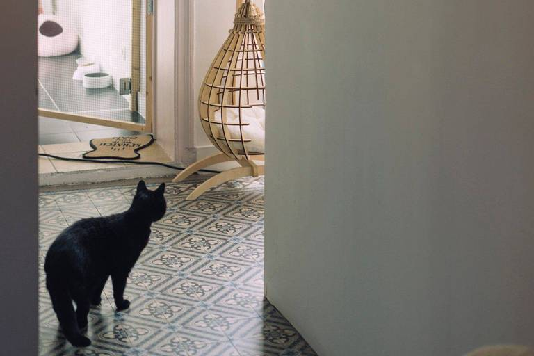 Série été animaux de compagnie chat Hôtel Hailie, Sarah.