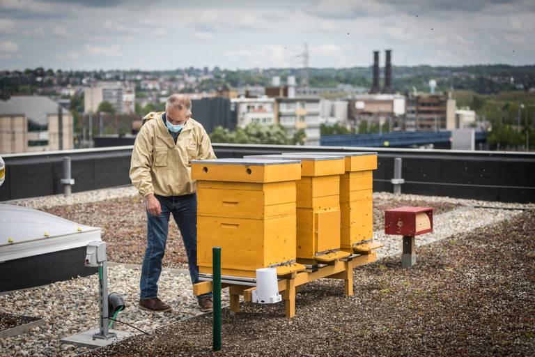 Des ruches connectées au Val Benoît