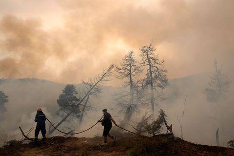Le WWF lance un appel aux dons pour aider la lutte contre les feux en Grèce et en Turquie