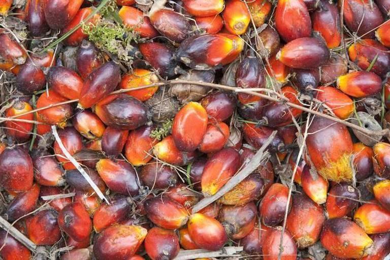 Jusqu'où faut-il se méfier de l'huile de palme ?