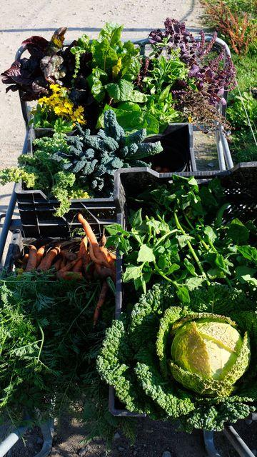 8 endroits où l'on cueille ses légumes et ses fruits soi-même