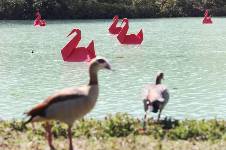 """La mystérieuse coloration """"laiteuse"""" d'un étang du parc de la Woluwe"""