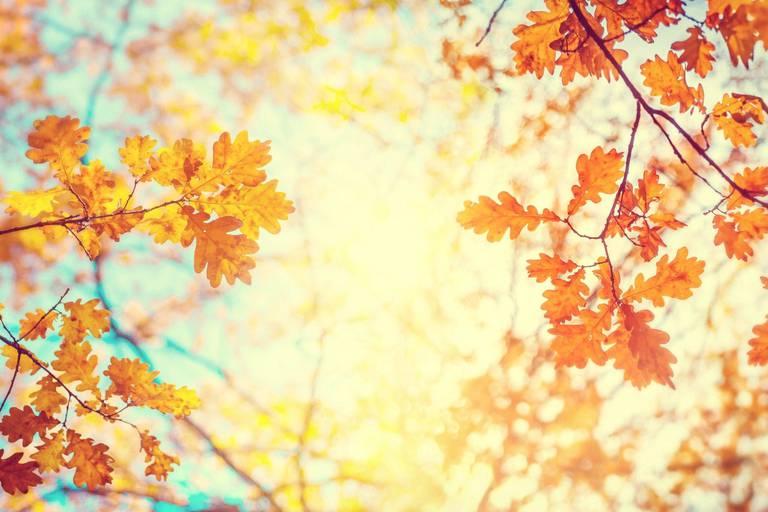 Peut-on espérer un bel automne après un été pluvieux?