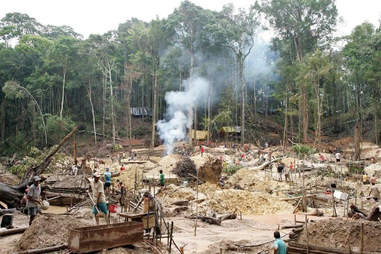 La forêt amazonienne a perdu 10.000 km2 en un an
