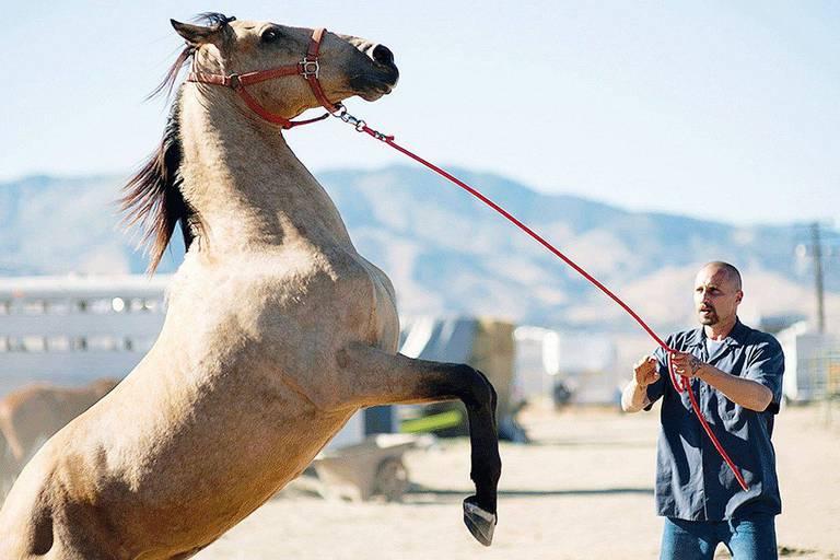 """""""The Mustang"""", avec Matthias Schoenaerts en prisonnier qui murmurait à l'oreille des chevaux"""