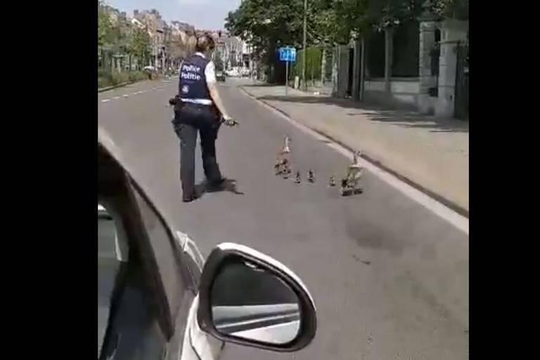 Insolite : la police d'Ixelles escorte une famille de canards jusqu'à son étang