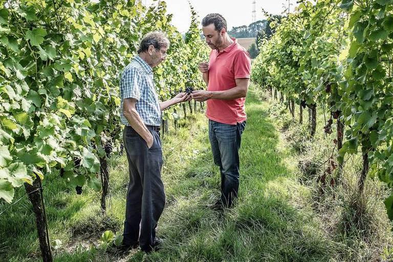 20170828 - Philippe Grafé domaine Viticole du Chenoy vignes vigne Wallonie PHOTO JOHANNA DE TESSIERES