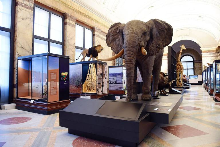 Africa Museum Tervuren culture africain musee art oeuvre architecture patrimoine collection parc flamand flandre