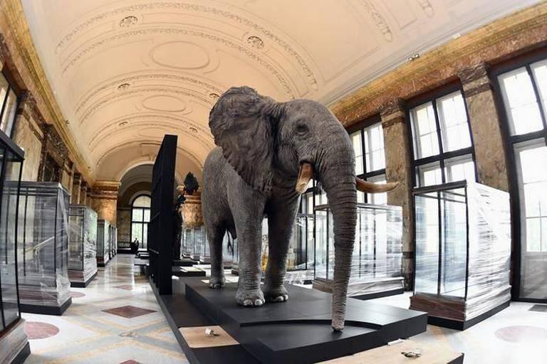 """L'AfricaMuseum, suffisamment """"décolonisé""""?"""