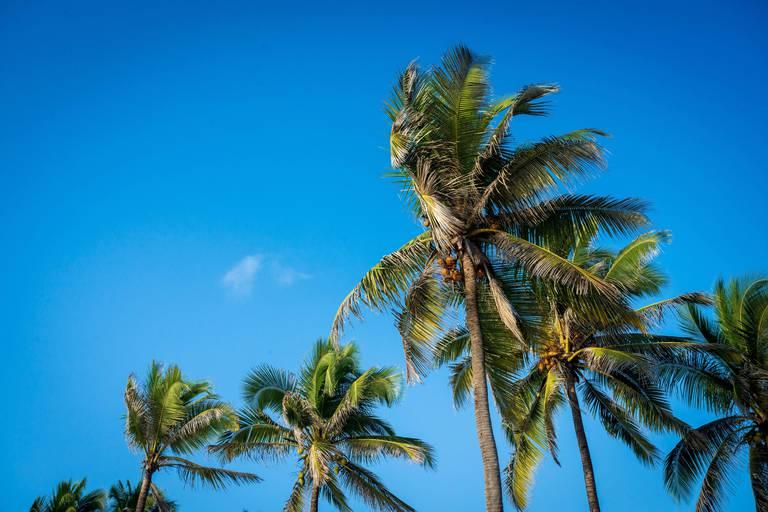 Coconut trees on Zanzibar