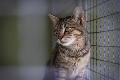Envie d'un chaton ? Un refuge propose d'adopter des animaux sur... Tinder