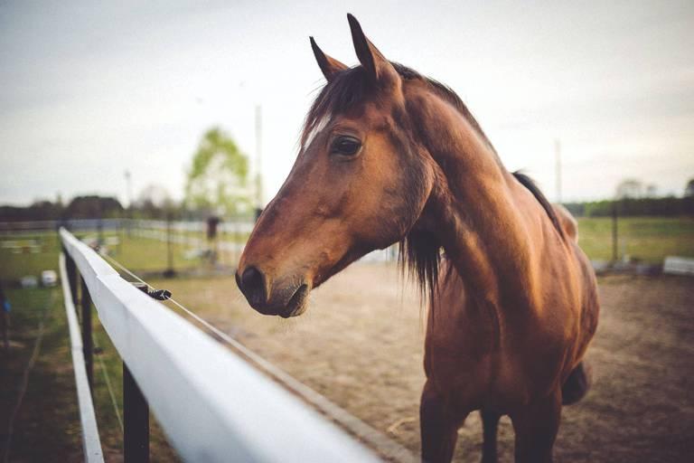 Des signes de falsification dans un passeport étranger sur cinq de chevaux d'abattage