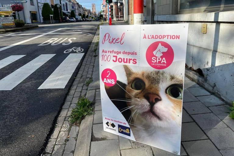 Trop peu d'adoptants de chats adultes, la SPA La Louvière tire la sonnette d'alarme