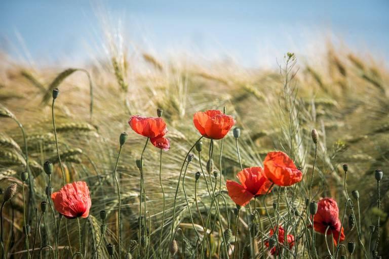 Vers une Wallonie zéro pesticide : projection en 2029