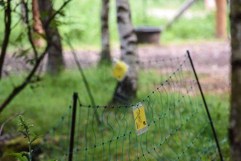 Une trentaine de moutons victimes d'attaques de loup dans les Hautes Fagnes depuis un mois