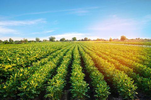 Plus de 7% de la superficie agricole belge était bio en 2020