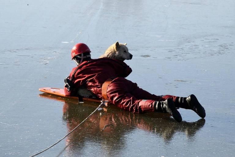 Le chien sauvé de la noyade à Anderlecht a retrouvé son maître