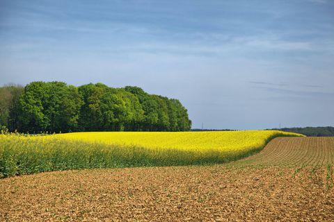 Le bio représente plus de 7 % de la superficie agricole belge