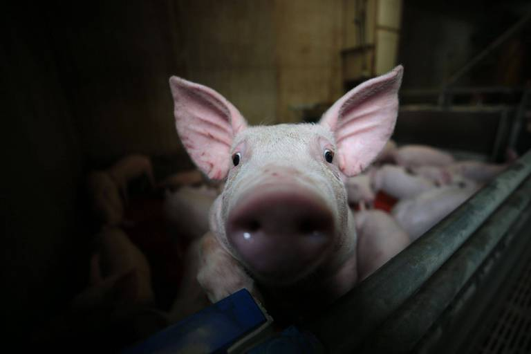 Ce label signifie que le porc utilisé dans la fabrication de la salaison est, entre autres, né en Wallonie.